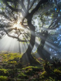 """Laurel Sunbeams"" by Oliver Wehrli."
