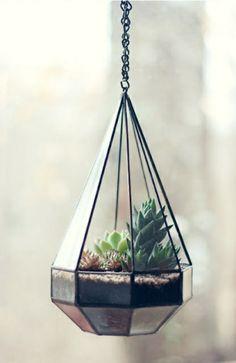 hängendes terrarium - wunderschönes aussehen