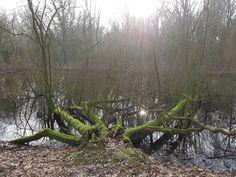 Best een appart zicht op deze plek in het Groningse stadspark. Deze Wellicht ooit omgevallen boom lijkt net een grote reusachtige groene spin die het water ingaat.  Als je je fantasie laat spreken na