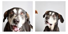 These photos are going to make you want to adopt a whole bunch of dogs.