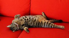 Astuce simple et efficace pour se débarrasser des poils de chats sur les canapés et sur les vêtements !