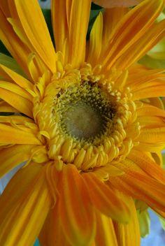 1140 best yellow flowers images on pinterest beautiful flowers blooming flowers gerbera yellow flowers cacti sunflowers heavenly beautiful flowers small flowers yellow drive way flowers mightylinksfo