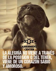 #Motivaciones #AssessmentCenter #MotivacionesAssessmentC