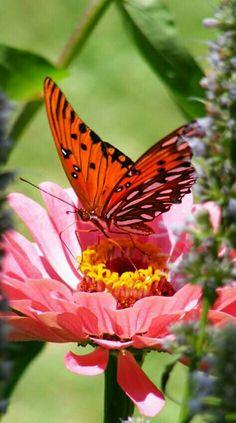 Nature's Beauty!