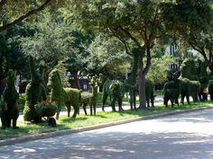 Topiary at Westheimer & Buffalo Speedway - 5 by adamrice, via Flickr