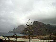 Plataneras por Tenerife