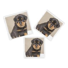 Rottweiler puppy portrait acrylic tray - portrait gifts cyo diy personalize custom
