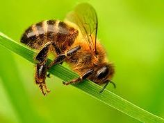 I am just done. Please don't move the stem, I might fall and I have no more energy for buzzing.