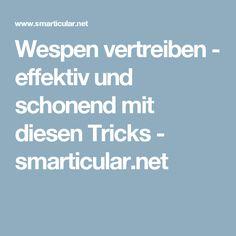 Wespen vertreiben - effektiv und schonend mit diesen Tricks - smarticular.net