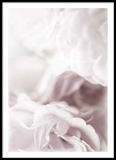 Dusty rose Plakat i gruppen Plakater / Størrelser / 40x50cm hos Desenio AB (2264)