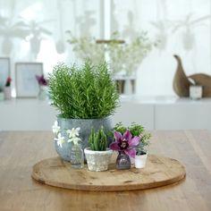 이미지 출처 http://lottieisloving.com/wp-content/uploads/2015/08/Styling-tips-indoor-plants-e1440978336377.jpg