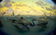 Dolphins at #sea #ocean #nature