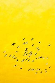 tect0nic: Birds in yellow   Daniel Mock via 500px