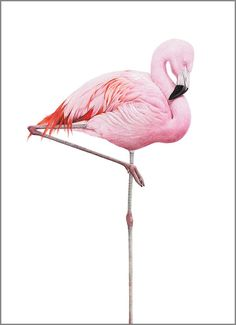 23 trendy Ideas for wallpaper rosa flamingo Flamingo Painting, Flamingo Art, Pink Flamingos, Flamingo Logo, Flamingo Gifts, Wallpaper Rosa, Flamingo Wallpaper, Trendy Wallpaper, Paris Wallpaper