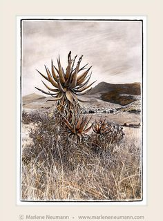 Cata Village - Marlene Neumann Fine Art Photography ~I normally don't like desert flora, but this is a really cool-looking one. I like the subdued colors for it. Fine Art Photography, Landscape Photography, Neumann, Picture Boards, Cata, Home Office Decor, Beautiful Artwork, Art Forms, Unique Gifts