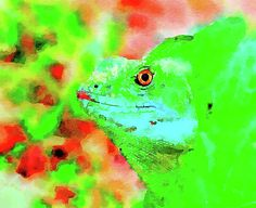 A digital watercoloring of a lizard coming out of the green/red background. Green Paintings, Digital Art, Watercolor, Wall Art, Pen And Wash, Watercolor Painting, Watercolour, Watercolors, Watercolour Paintings