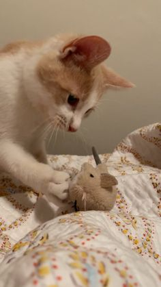 Kitten Plays with Mouse 🐭😸 Kittens Playing, Kittens Cutest, Cats And Kittens, Cute Cat Gif, Cute Cats, Funny Cats, Pretty Animals, Cute Baby Animals, Anime Friendship