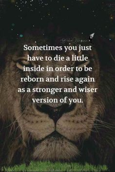 Lioness Quotes, Tiger Quotes, Wolf Quotes, Karma Quotes, Me Quotes, Motivational Quotes, Inspirational Quotes, Badass Quotes, Good Life Quotes