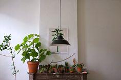 Pumped about Plants