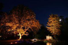 Så belyser du träd i trädgården – steg för steg