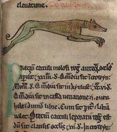 Ancient greyhound