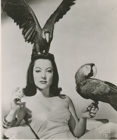 Yvette Dare and her macaws.