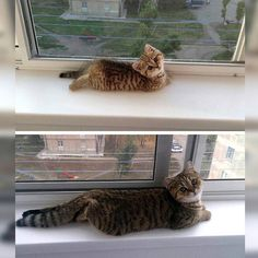 They Grow up so Fast - World's largest collection of cat memes and other animals Amor Animal, Mundo Animal, Pretty Cats, Beautiful Cats, Cute Kittens, Cats And Kittens, Cute Funny Animals, Funny Cute, Top Funny
