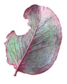 Afbeeldingsresultaat voor angela lober botanical artist