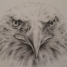 Bald Eagle Drawing - my sister is just showing off her ability to use a regular No. 2 pencil to create this spectacular drawing of a bald eagle. This drawing, for sale on her Etsy webpage, is perfect for any bird lover or any Harley Davidson fan!