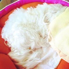 One of those Mondays... #Mondaycoffee #puppylove #adorable #chanel  #brandnewweek #brandnewbeginning #LiveLoveLaugh  #stayhappy #TagsForLikes.com #dog #doglover #dogoftheday #instapuppy #puppy #puppylove #packleader #petstagram #photooftheday #rcmstylist #happyme