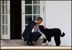 If a Portuguese Water Dog is my dream dog, does that mean that I'm on my way to the Oval Office ?