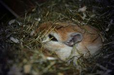 Kaninchenfan Lucky - Mein Kaninchenloch: My gerbils seem also sleepy like me hehe ^_~  #gerbil #rennmaus   http://kaninchenfanlucky-meinkaninchenloch.blogspot.de/2014/01/my-gerbils-seem-also-sleepy-like-me-hehe.html