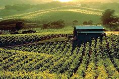 Wine country I love in general but specifically Sonoma/Napa counties and Santa Rosa holds a spot in my heart