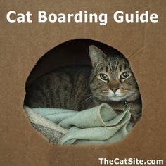 Cat Boarding Guide - http://www.thecatsite.com/a/cat-boarding-guide