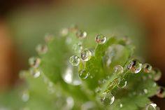 Drops ..