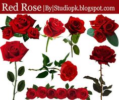 Red Rose Png, Red Roses, Photoshop Plugins, Adobe Photoshop, Wedding Album Design, Wedding Albums, Marriage Photo Album, Flower Images Free, Wedding Clip