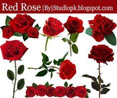 Red Rose Transparent Png Images Download