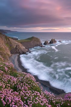 The Pink Coast  Devon, England