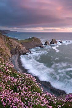 The Pink Coast  Devon, England