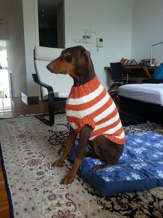Ravelry: The Ozzie large dog sweater pattern by Jenna Greer