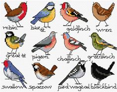 (S) songbirds - free chart by Lesley Teare Designs