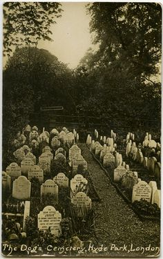 The Dog's Cemetery in Hyde Park, London. http://www.weekendnotes.co.uk/hyde-park-pet-cemetery/