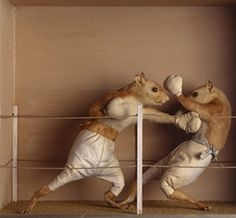 Mouse Taxidermy.