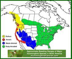 Range Map For The Bald Eagle Wildlife Of Bc Eagle