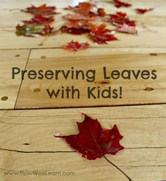 The easiest way of preserving leaves with kids! Straight forward and using whatever you have on hand! A great way to keep the beautiful colors of Autumn around for a long time. www.HowWeeLearn.com