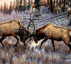 Backsplash design ideas - Wildlife tiles - The Battle-CF - Tile Mural Wildlife Paintings, Wildlife Art, Animal Paintings, Oil Paintings, Elk Images, Moose Pictures, Wild Life, Elk Drawing, Elk Silhouette