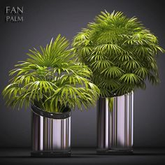 Palm plants 53 model, This Collection is amazing, Textures model ready for VR, accurately design for perfect visualization Cloud Decoration, Low Poly 3d Models, 3d Visualization, Plant Decor, 3d Printing, The Incredibles, Photoshop, Texture, Palm Plants