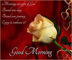 Good morning love images are makes you very happy and romantic morning of the day. If you share those good morning love images to your loved ones or closed Romantic Good Morning Sms, Good Morning Love Messages, Good Morning Texts, Good Morning Picture, Good Morning Greetings, Good Morning Good Night, Morning Pictures, Good Morning Wishes, Good Morning Images