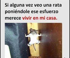 #momos #memes #memesespañol #momosespañol #imagenesgraciosas #humor #comedia #frases #memes2018 #memesenespañol #memeschistosos #humornegro