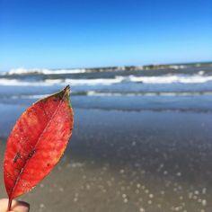Leaf.  #lungomare #pesaro #igersitalia #igerspu #igers #leaves #leaf #red #mare #clouds #sky #skyporn #colorful #landscape #view #orizzonte #sea #sky  #mare #porto #landscape #cielo #instamoments #instasea #igers  #marche #tourism #amazing #wonderful_places